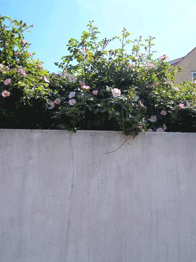 Trädgårdsdesign Malmö-17